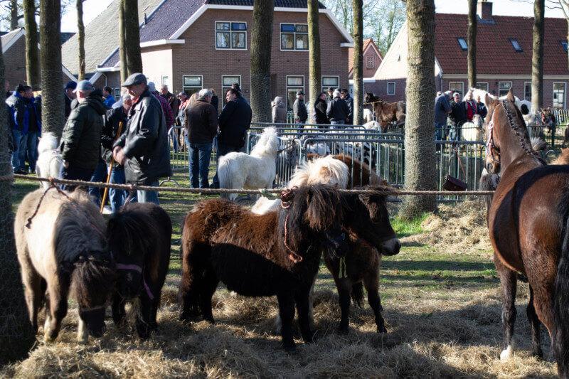 Paardenhandelaren bezoeken Zuidlaren tijdens voorjaarsmarkt