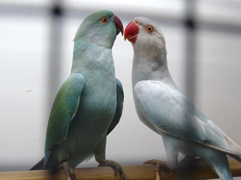 Ongenode gast – Vogelshow